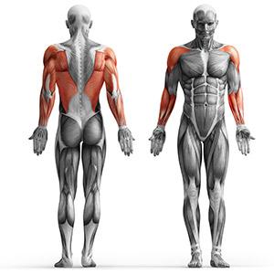 MH-W101_muscles.jpg