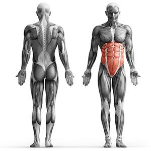 MS-L110_muscles.jpg